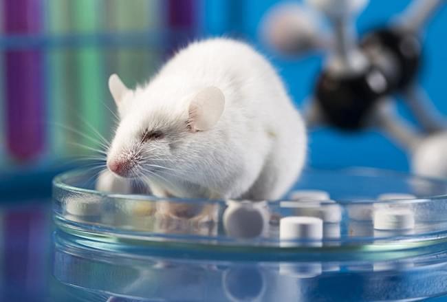 Всесвітній день захисту лабораторних тварин