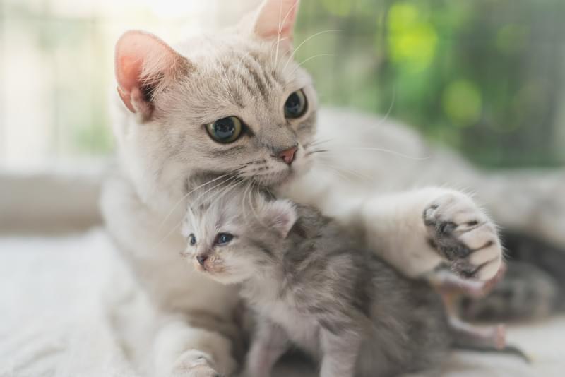 Кошки заразились коронавирусом