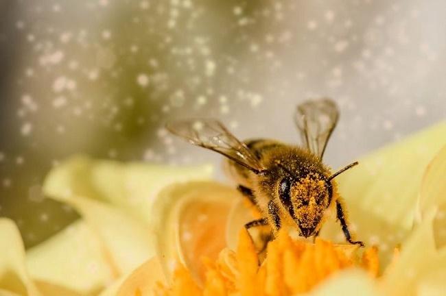День пчел 2020