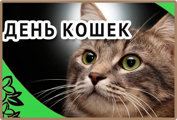 поздравления с днем котов