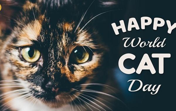 Привітання в День кішки 2020