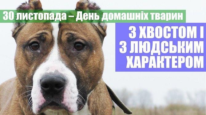 Всесвітній день домашніх тварин  картинки та листівки